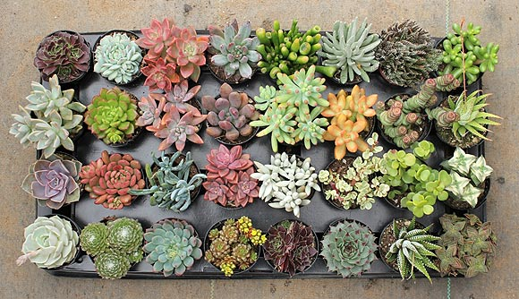 Articles In The Past Week Two Nursery Trade Publications And One A Por Gardening Magazine Each Stating Same Thing Succulents Are Set To