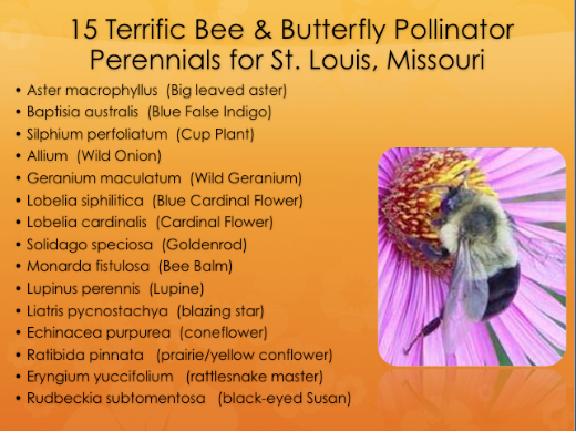 15 Terrific Bee & Butterfly Pollinator Perennials for St. Louis, Missouri.
