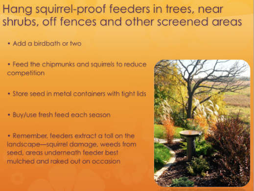 Hang squirrel-proof feeders in trees, near shrubs, off fences and other screened areas.