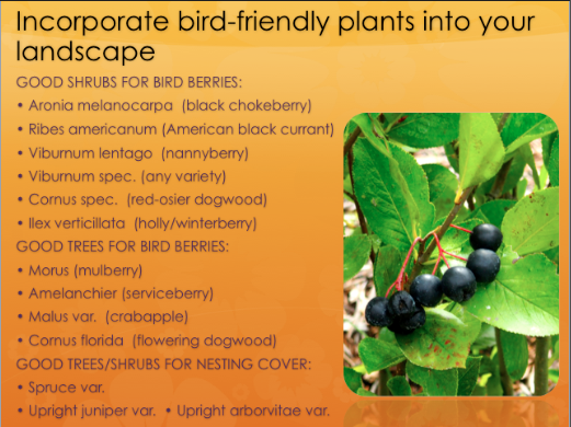 Incorporate bird-friendly plants into your yardscape