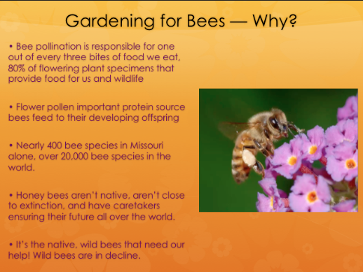 Bee pollination is responsible for one out of every three bites of food we ear, 80% of flowering plant specimens that provide food for us and wildlife.