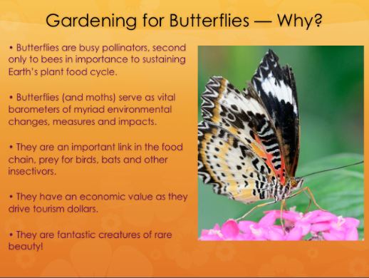 Butterlfies are busy pollinators, second only to bees in importance to sustaining Earth's pant food cycle.
