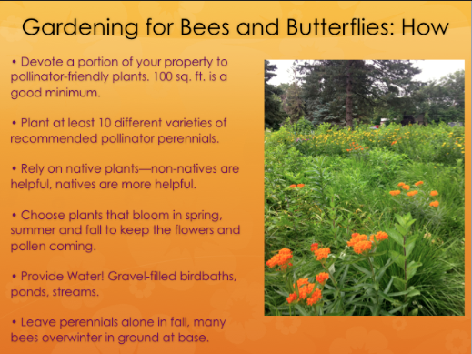 Devote a portion of your property to pollinator-friendly plants, 100 sq. ft. is a good minimum.